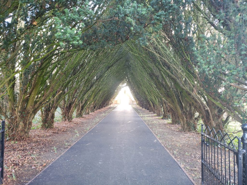 Tree arch, Maynooth University