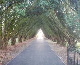 Maynooth Univerity Cemetery entrance path